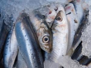 sardines-1106190_960_720